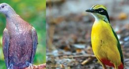 Survival of rarest birds found in eastern Himalayas at risk