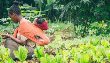 African countries to develop climate-resilient agriculture systems